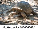 seychelles giant tortoise  | Shutterstock . vector #1034549422
