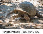 Stock photo seychelles giant tortoise 1034549422