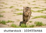 cat walking on the street... | Shutterstock . vector #1034556466