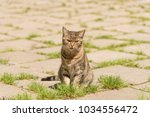 cat walking on the street... | Shutterstock . vector #1034556472