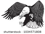 bald eagle in the fly . white... | Shutterstock .eps vector #1034571808