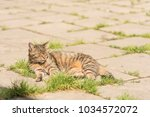striped cat on the street.  | Shutterstock . vector #1034572072