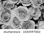 black and wite roses  | Shutterstock . vector #1034597002