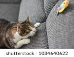 Stock photo cute cat playing with toy at home 1034640622