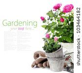Stock photo beautiful pink roses in a flowerpots and garden tools isolated on white with easy removable text 103464182