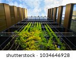 sprawling plants on outdoor...   Shutterstock . vector #1034646928