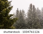 foggy mountain trees at wood.... | Shutterstock . vector #1034761126