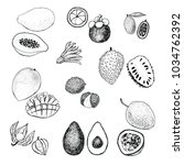 tropical fruits vector... | Shutterstock .eps vector #1034762392