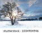 bare tree in a snow field with... | Shutterstock . vector #1034904946