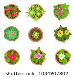 set of colored pot plant top... | Shutterstock .eps vector #1034907802