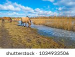 feral horses in a field along a ... | Shutterstock . vector #1034933506