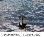 a beautiful graceful white...   Shutterstock . vector #1034956402