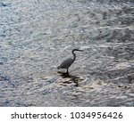 a beautiful graceful white...   Shutterstock . vector #1034956426