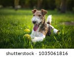 cute dog image | Shutterstock . vector #1035061816