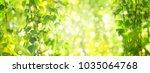 green birch  leaves branches ... | Shutterstock . vector #1035064768