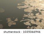 moss in the water | Shutterstock . vector #1035066946