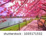 benches under cherry trees in... | Shutterstock . vector #1035171532