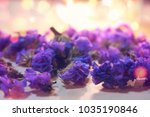 fall purple flowers closeup on... | Shutterstock . vector #1035190846