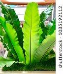green tree leaf closeup in... | Shutterstock . vector #1035192112