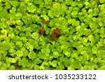 high angle view of ground cover ...   Shutterstock . vector #1035233122