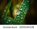 dew on the plant | Shutterstock . vector #1035244138