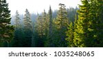 Forest At Mount Rainier...
