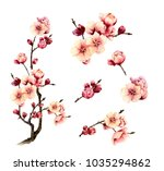 picture set of a blossomy plum... | Shutterstock . vector #1035294862