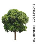 isolated green tree on white... | Shutterstock . vector #1035346048