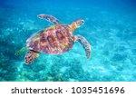 sea turtle in clear blue sea... | Shutterstock . vector #1035451696