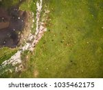 aerial view of an herd of cows... | Shutterstock . vector #1035462175