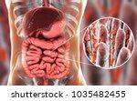 intestinal microbiome  anatomy...   Shutterstock . vector #1035482455