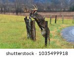 Buck Jumping Fence In Smoky...