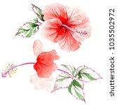 wildflower rose flower in a... | Shutterstock . vector #1035502972