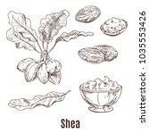isolated sketches of shea nuts... | Shutterstock .eps vector #1035553426