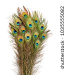 carnival peacock feathers.  | Shutterstock . vector #1035555082