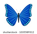 Stock vector blue butterfly isolated on white background vector illustration 1035589312