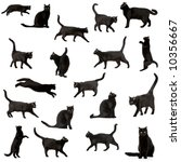 black cat in front of a white...   Shutterstock . vector #10356667