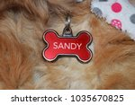 dog name collar | Shutterstock . vector #1035670825
