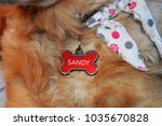 Dog Name Collar