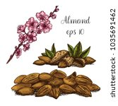 hand drawn almonds and branch... | Shutterstock .eps vector #1035691462