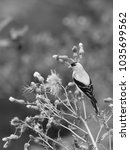 Small photo of American Goldfinch vertical black and white photo