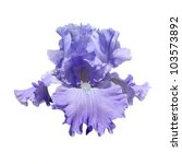 Violet Iris Isolated On A Whit...