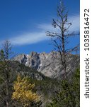 Small photo of Standing Tall and Ageless. An old tree graces the foreground of a snowy peak in the Rockies