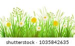 summer or spring green grass... | Shutterstock .eps vector #1035842635
