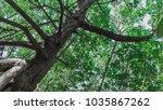 mangrove habitat in the tropics ... | Shutterstock . vector #1035867262