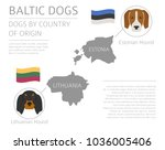 dogs by country of origin.... | Shutterstock .eps vector #1036005406