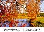 autumn tree branche leaves... | Shutterstock . vector #1036008316