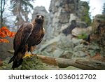 eagle  wide ange  stone rock... | Shutterstock . vector #1036012702