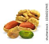 fresh walnut  nutritious... | Shutterstock .eps vector #1036021945