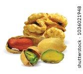 fresh walnut  nutritious... | Shutterstock .eps vector #1036021948